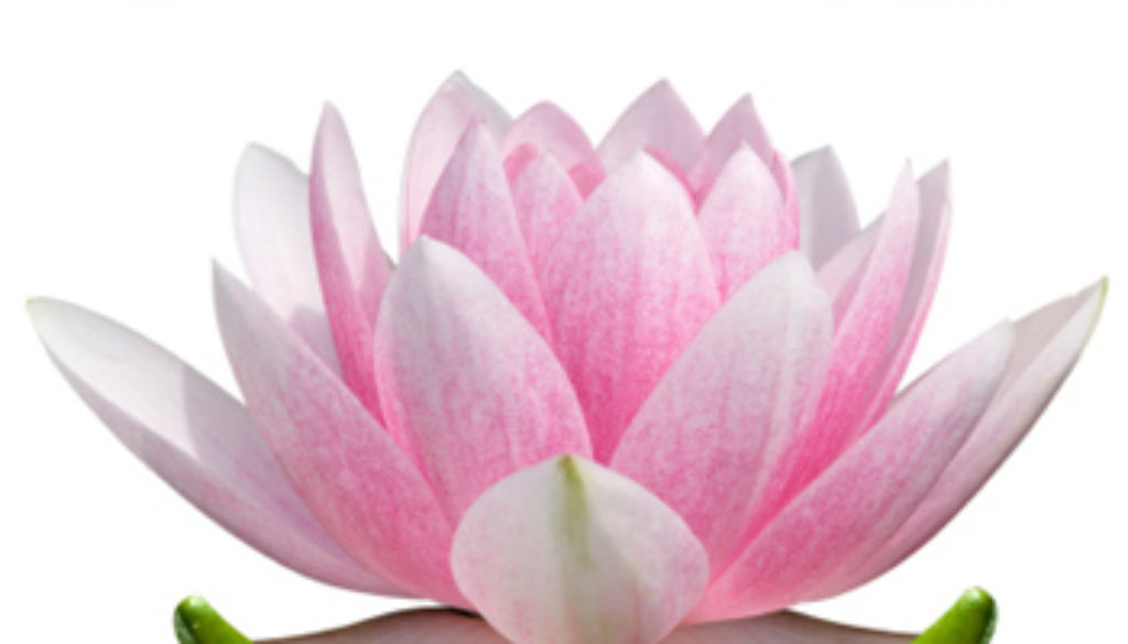 Living with an eating disorder contest entry beating eating lotus flower meaning 3 mightylinksfo